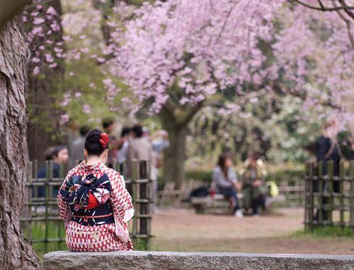 enjoying hanami